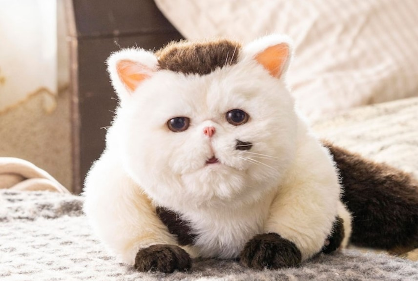 ドラマ【おじさまと猫】ふくまるのぬいぐるみはどこで買える?